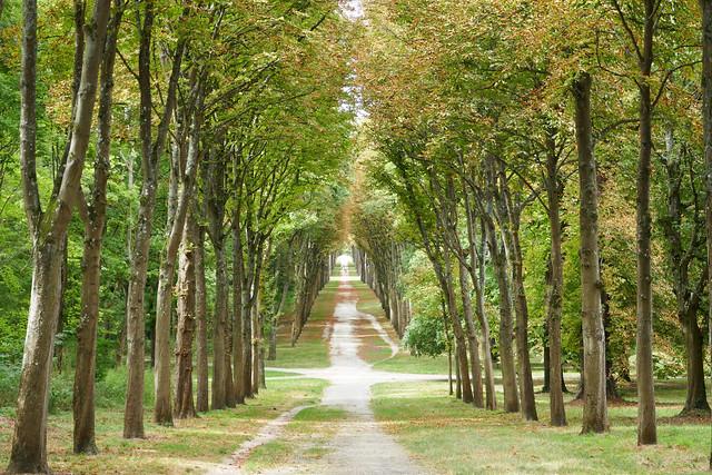 Path through the Fontainebleau, Panasonic DMC-ZS100