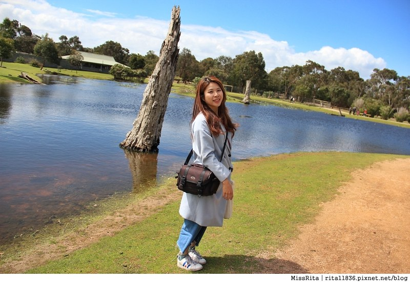 KKDAY 墨爾本自由行 melbourne gowesttours kkDAY墨爾本 墨爾本企鵝 澳洲自助 墨爾本自助 菲利浦島 菲利浦島交通 墨爾本必去 墨爾本酒莊 月光野生動物 Nobbies 墨爾本企鵝歸巢 墨爾本一日遊 菲利普島一日遊,小企鵝歸巢遊行65