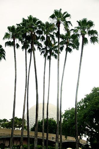 Epcot-Palm-Trees