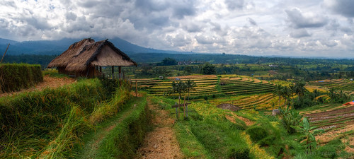 bali hdr indonesia indonésie jatiluwih paysage riceterraces rizières landscape montagne mountain penebel cloudy day green vert 500px