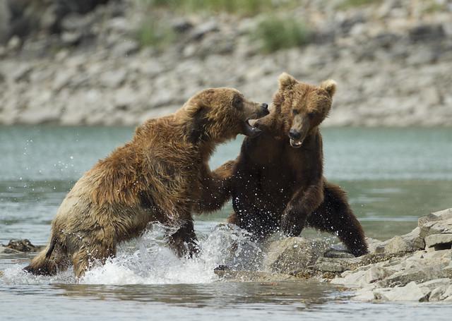 Bears, Alaska.