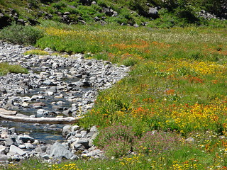 Wildflowers along the South Breitenbush River