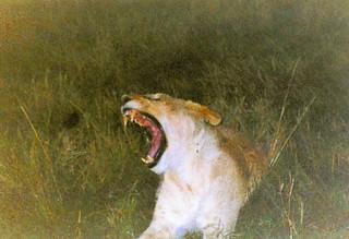 Kenia2002-08-07