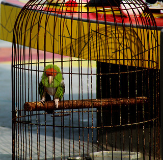 Image of Playa Blanca - Punta Hermosa. bird beach peru parakeet summertime canary puntahermosa