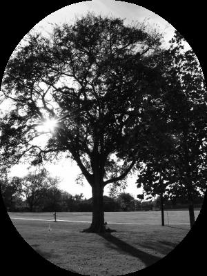 Tree pic.2