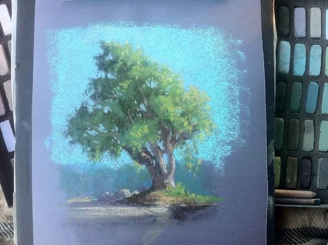 Lundman_treestudy2_LakeMerced