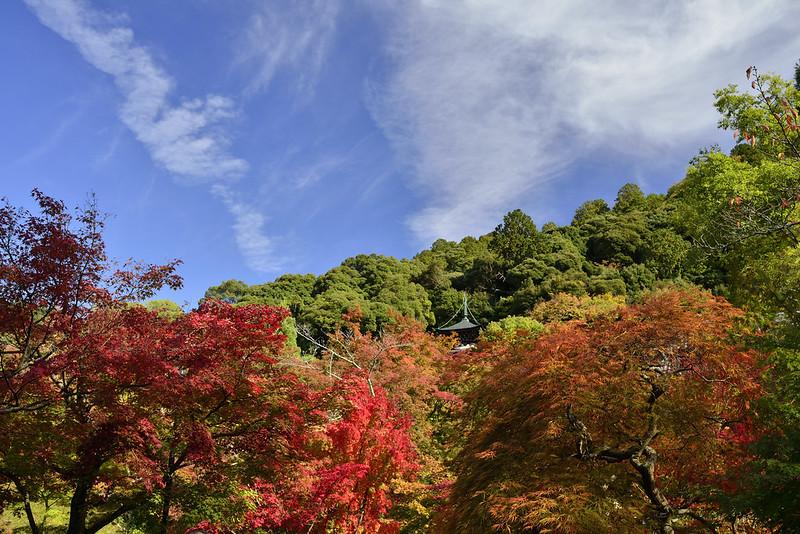2013.11.14 京都 永観堂