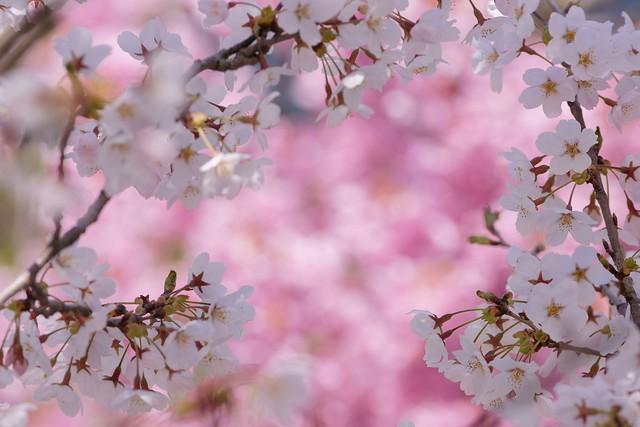 写真_捲り来る春