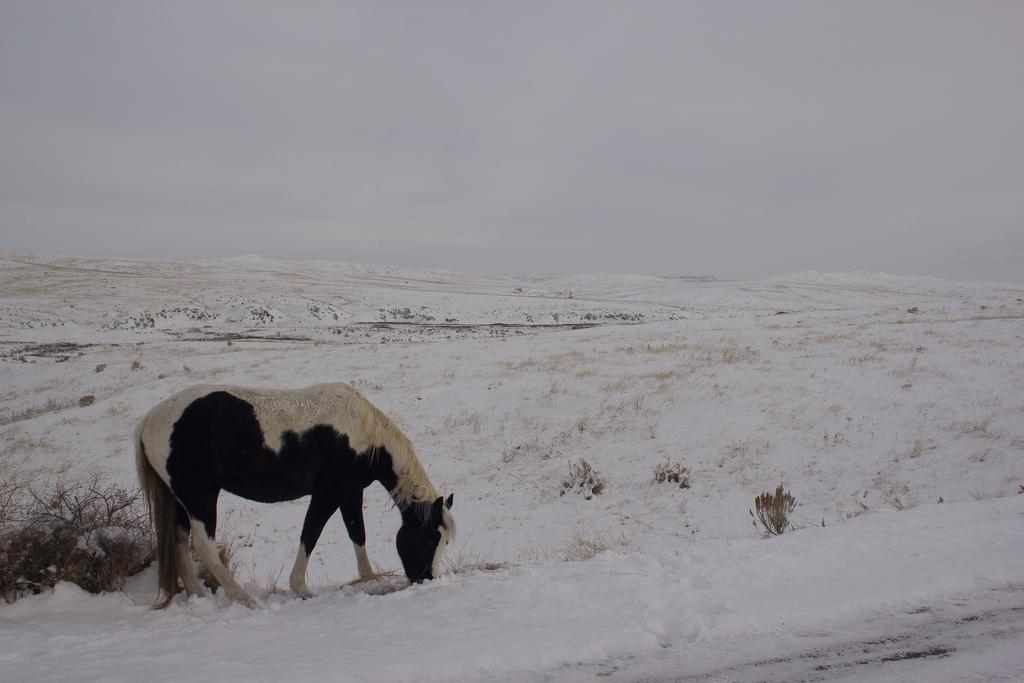 21. Invierno en las praderas y caballo indio. Autor, MattCadwallader