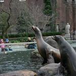 Twin sea lions