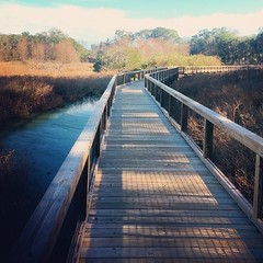 Cypress Wetlands Trail