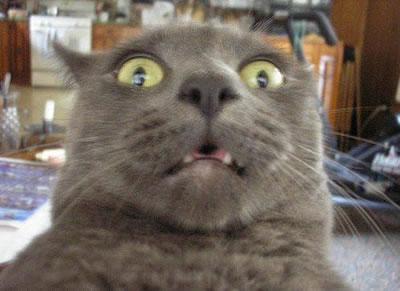 20-Funny-Shocked-Cat-Memes-21