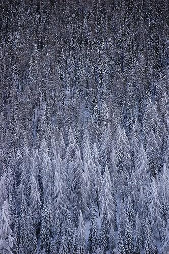 Snow Trees - Vertical