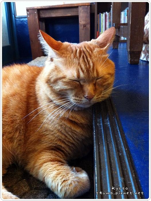 胖貓咖啡 (12).jpg