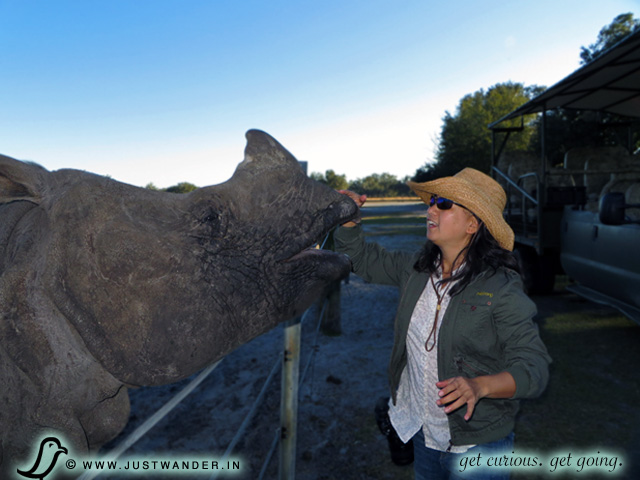 PIC: Maya of JustWander.in petting an Indian Rhino