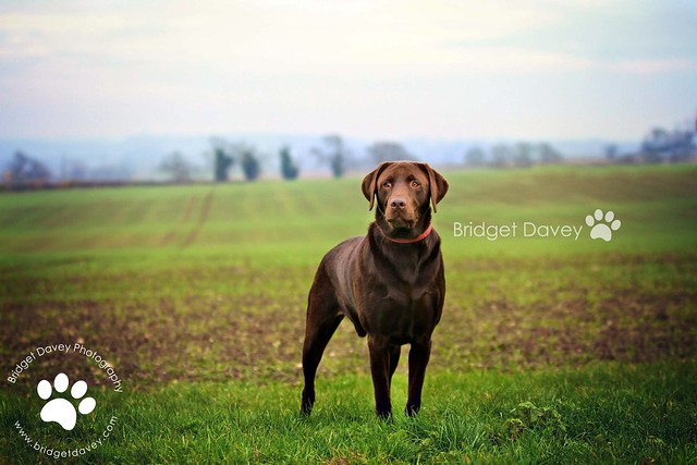# Flickr explored Jerry | Pet Photography Buckinghamshire