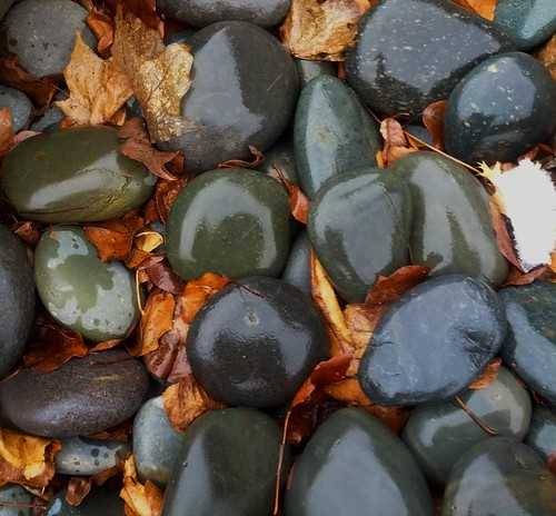 Leaves and Stones