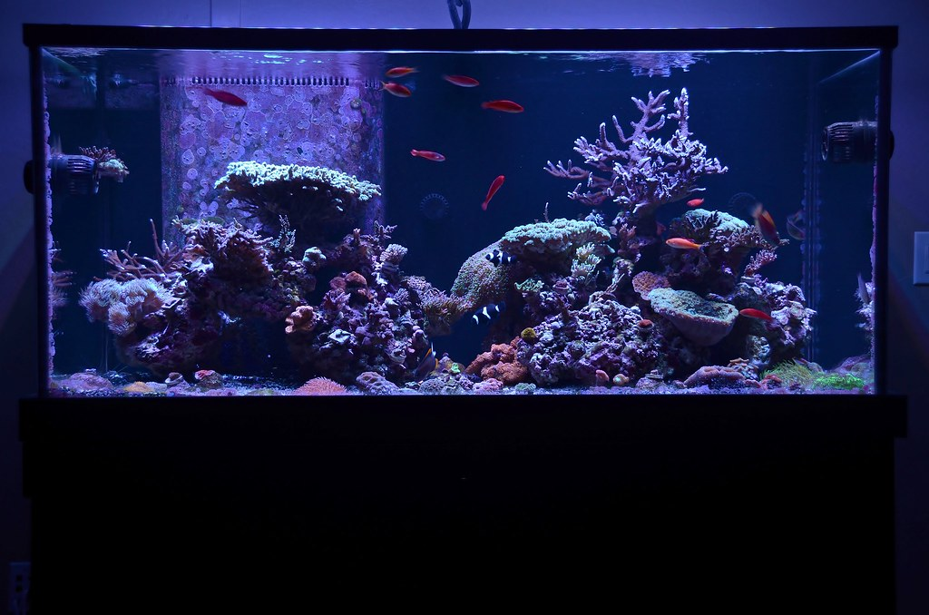 Dsa Aquariums
