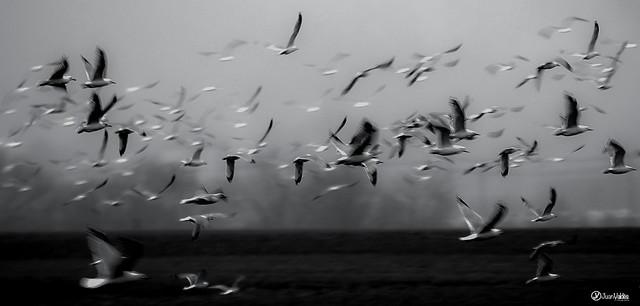 J.Valdés - Birds