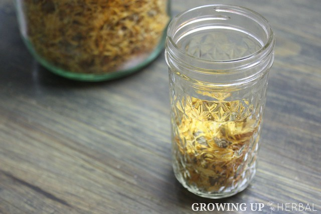 Learning Herbs: June Herb Challenge – Week 3   GrowingUpHerbal.com   Calendula Essential Oil, Infusions, & Poultices