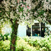 Apple Tree by lynnlin