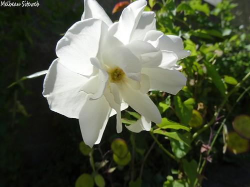 Côté jardin ;)