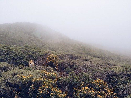 20140601 Marin Headlands in the fog