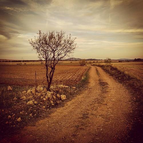 Camino Real. Alcadozo (Albacete, Spain)