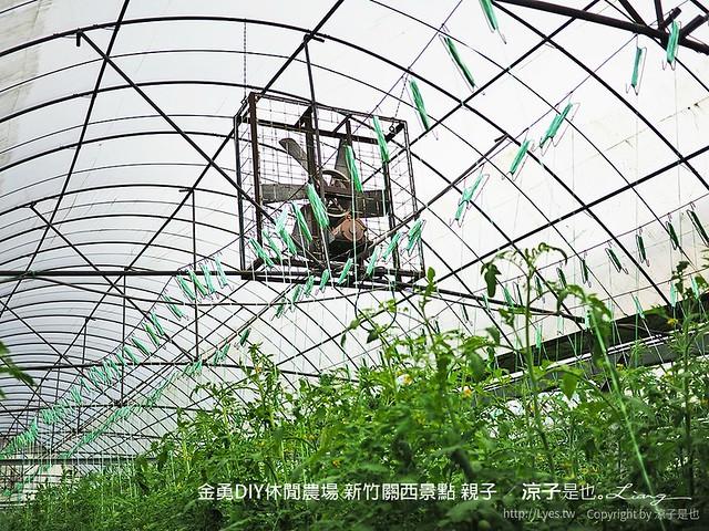金勇DIY休閒農場 新竹關西景點 親子 66