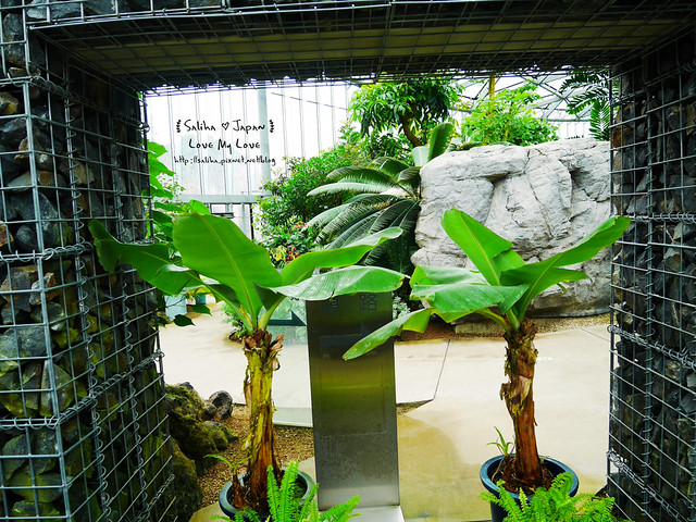 日本東京景點新宿御苑溫室植物 (4)