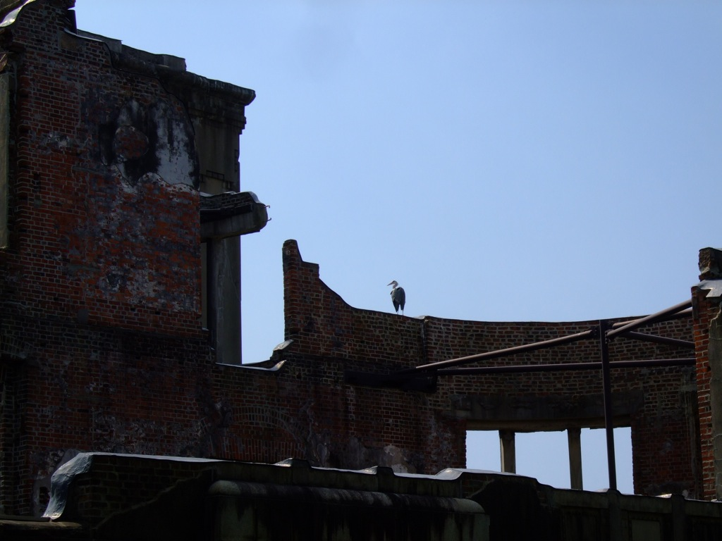 Birds on the Bomb Dome 2