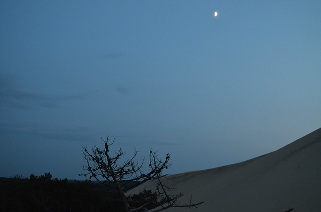 france_dune_du_pyla_duneofpilat_tree_moon