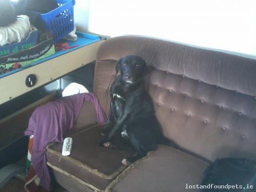 Sat, Dec 8th, 2012 Lost Male Dog - Connemara, Toureen, Galway
