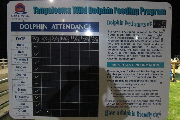 Dolphin-Feeding-2