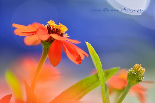 青とオレンジ Blue & orange