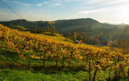 autumn österreich nikon herbst vineyards nikkor vr afs steiermark weinberge südsteiermark 1685 d7100 southstyria ratschanderweinstrase