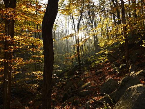 autumn nature forest sunrise newjersey hacklebarneystatepark