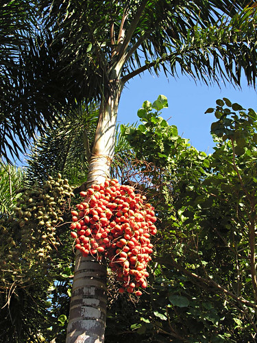 Palmetum, Santa Cruz de Tenerife