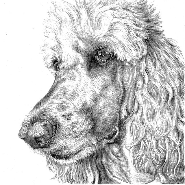Black And White Realistic Dog Drawing