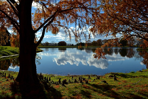 autumn trees ohio sky lake reflection fall nature water grass clouds landscape sunny arboretum foliage cypress newark dawes metroparks2014