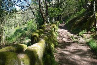 El camino mozárabe en plena naturaleza.