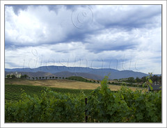 Storm Clouds Over Vineyard wm b
