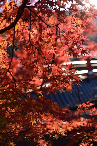 Autumnal leaves of Muro-ji temple No.2.