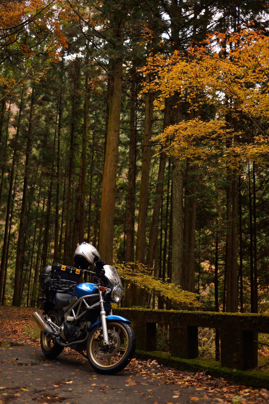 晩秋の倉沢林道