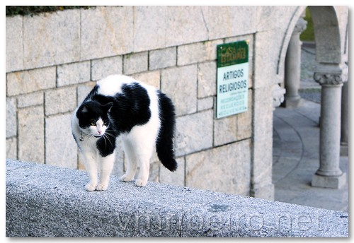 A religious cat... by VRfoto