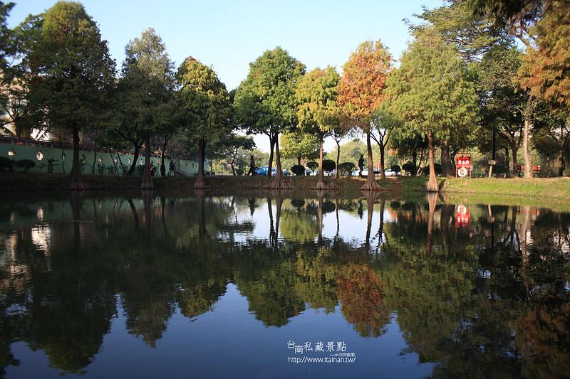 台南私藏景點--巴克禮落羽松 (1)