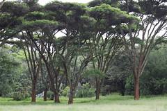 Harare Botanical Garden