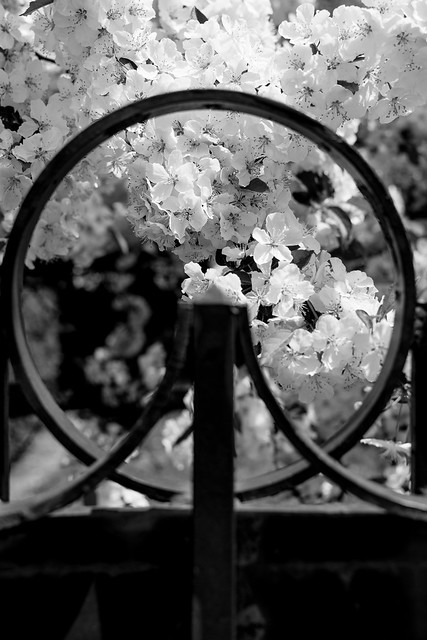 Ring of Flower