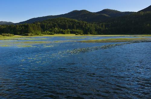 nature landscape geotagged spring slovenia slovenija yellowpondlily yellowwaterlily pomlad cerknicalake cerkniškojezero intermittentlake rumeniblatnik