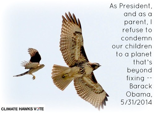 parent hawk CHVotes